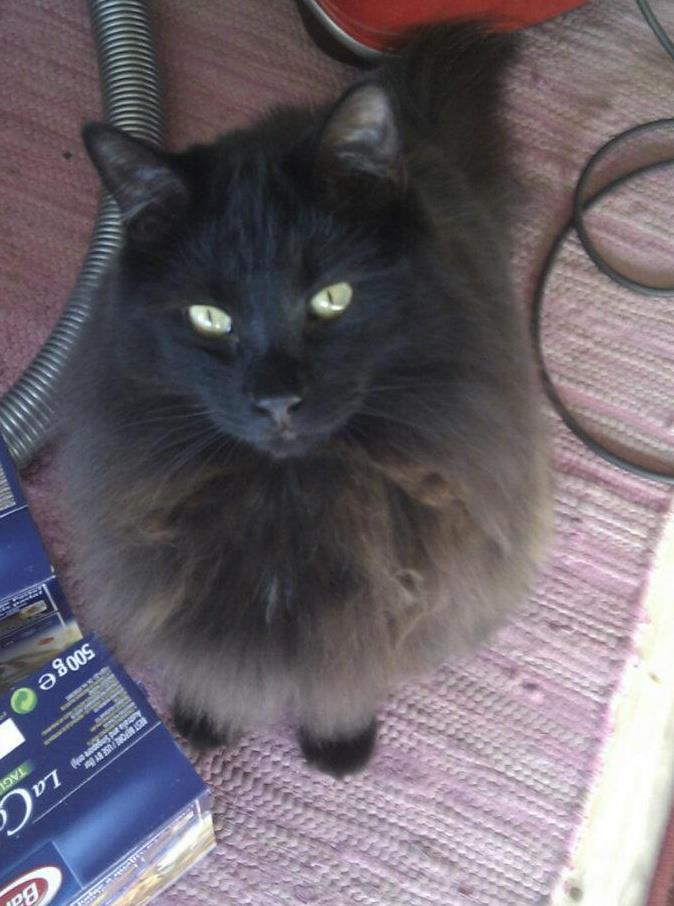 bran_the_cat