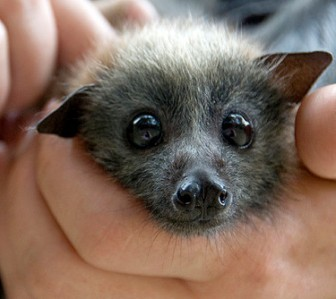 cute_bat